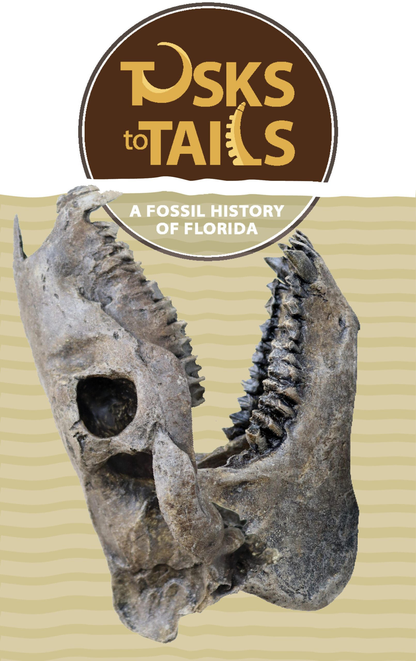 Tampa Bay History Center -- Tusk to Tails: A Fossil History of Florida exhibit